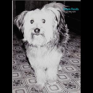 Photo argentique chien